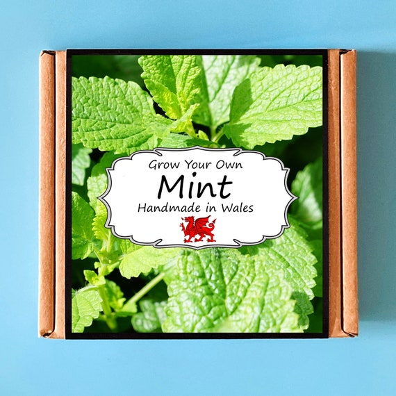 Grow Your Own Mint Herb Plant Kit - Indoor Gardening Gift