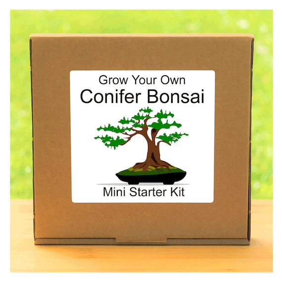 Grow Your Own Conifer Bonsai Tree – Complete beginner friendly indoor gardening starter kit – Gift for men, women or children