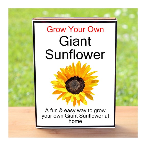 Gardening Gift For Men Or Women Who Have Everything – Grow Your Own Giant Sunflower