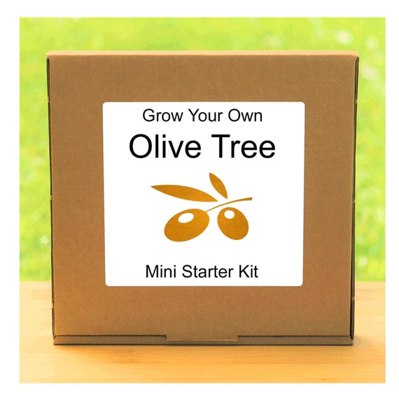 Grow Your Own Olive Tree Growing Kit – Complete beginner friendly indoor gardening starter kit – Gift for men, women or children