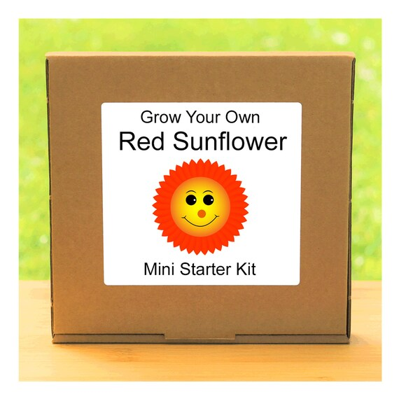 Grow Your Own Red Sunflower Plant Growing Kit – Complete beginner friendly indoor gardening starter kit – Gift for men, women or children