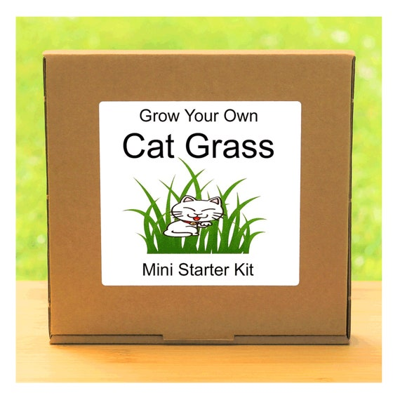 Grow Your Own Cat Grass Growing Kit – Complete beginner friendly indoor gardening plant starter kit – Gift for men, women or children