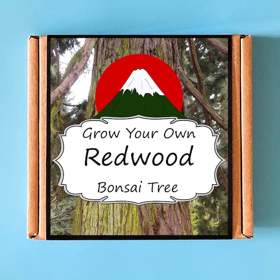 Grow Your Own Californian Redwood Bonsai Tree Kit - indoor gardening gift for adults or children - perfect birthday gift