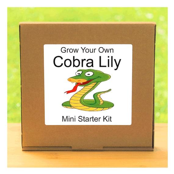 Grow Your Own Carnivorous Cobra Lily Plant Growing Kit – Beginner friendly indoor gardening starter kit – Gift for men, women or children