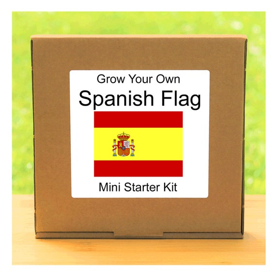 Grow Your Own Spanish Flag Plant Growing Kit – Beginner friendly indoor flower gardening starter kit – Gift for men, women or children