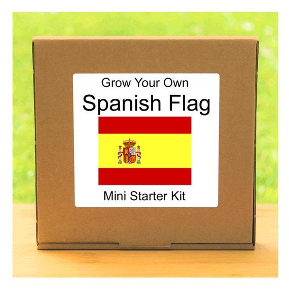 Grow Your Own Spanish Flag Plant Growing Kit – Beginner friendly indoor flower gardening starter kit
