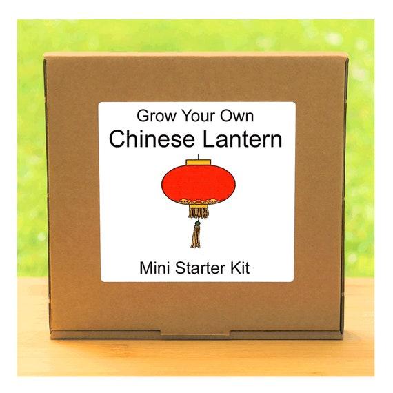 Grow Your Own Chinese Lantern Plant Growing Kit – Complete beginner friendly indoor gardening starter kit – Gift for men, women or children