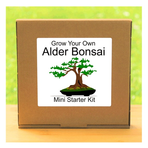 Grow Your Own Alder Bonsai Tree – Complete beginner friendly indoor gardening starter kit – Gift for men, women or children