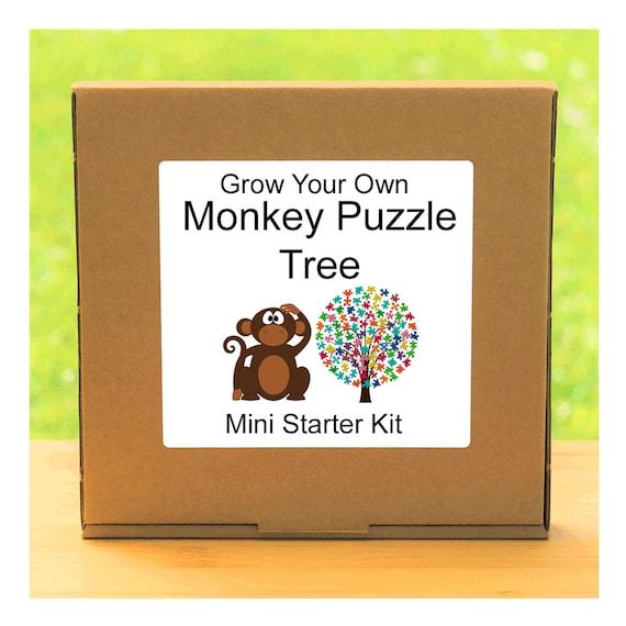 Grow Your Own Monkey Puzzle Tree Growing Kit – Beginner friendly complete starter kit - indoor gardening gift for men, women or children