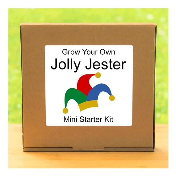 Grow Your Own Jolly Jester Marigold Plant Growing Kit – Beginner friendly indoor gardening starter kit – Gift for men, women or children