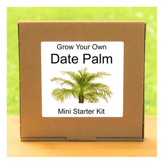 Grow Your Own Date Palm Tree Growing Kit – Complete beginner friendly indoor gardening starter kit – Gift for men, women or children