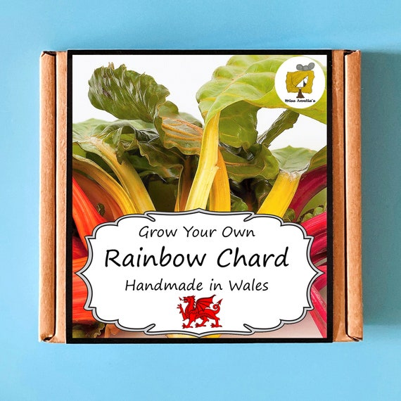 Grow Your Own Rainbow Chard Plant Kit. Indoor Gardening Gift. Perfect Birthday Gift For Adults, Children, Kids. Vegetable Planting Kit.