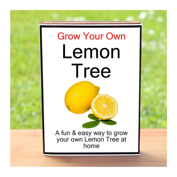 Gardening Gift For Men Or Women Who Have Everything – Grow Your Own Lemon Tree