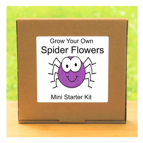 Grow Your Own Cleome Spider Flowers Growing Kit – Complete beginner friendly indoor gardening starter kit – Gift for men, women or children
