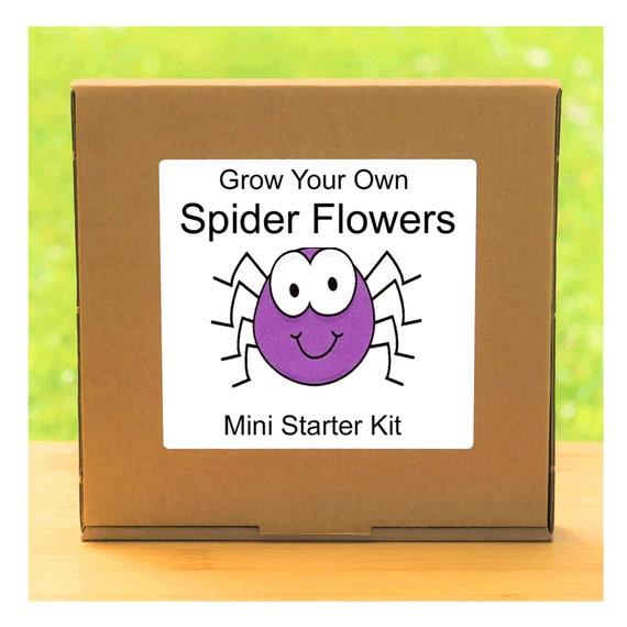 Grow Your Own Cleome Spider Flowers Growing Kit – Complete beginner friendly indoor gardening starter kit