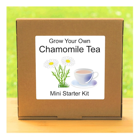 Grow Your Own Chamomile Herbal Tea Plant Growing Kit – Complete beginner friendly gardening starter kit – Gift for men, women or children