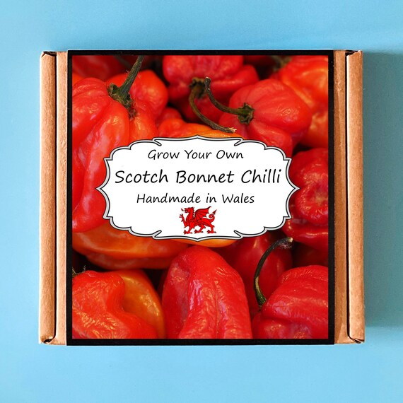 Grow Your Own Scotch Bonnet Hot Chilli Plant Kit - Indoor Gardening Gift