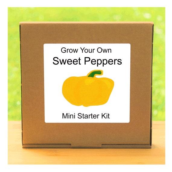 Grow Your Own Sweet Bell Pepper Plant Growing Kit – Beginner friendly indoor gardening starter kit – Gift for men, women or children