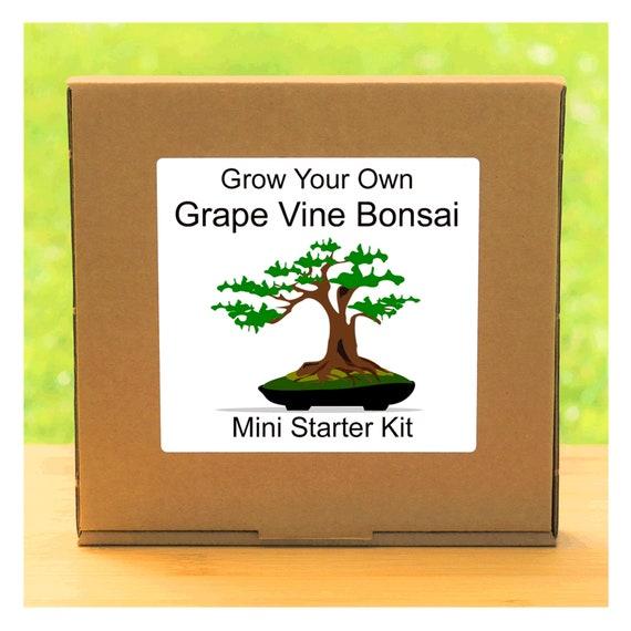 Grow Your Own Grape Vine Bonsai Tree Growing Kit – Complete beginner friendly indoor gardening starter kit – Gift for men, women or children