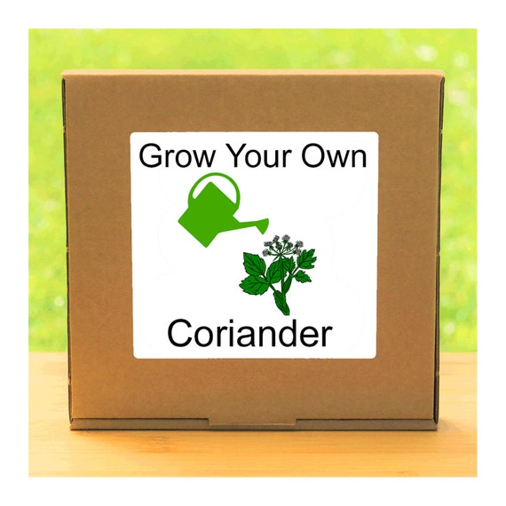 Windowsill Herb Garden - Grow Your Own Coriander Plant Growing Kit – Complete beginner friendly indoor gardening starter kit