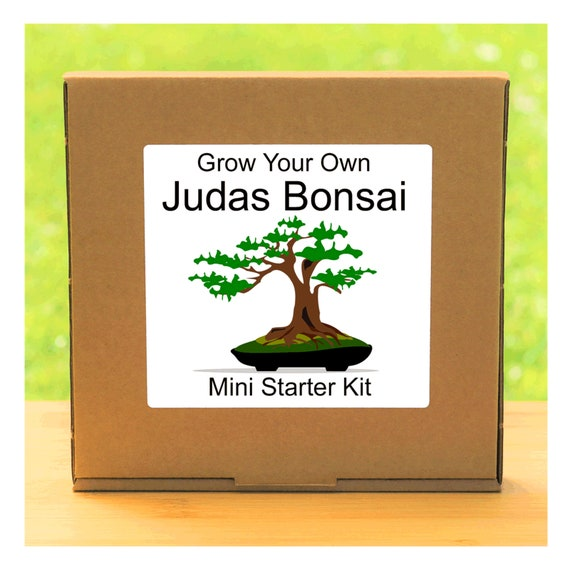 Grow Your Own Judas Bonsai Tree – Complete beginner friendly indoor gardening starter kit – Gift for men, women or children