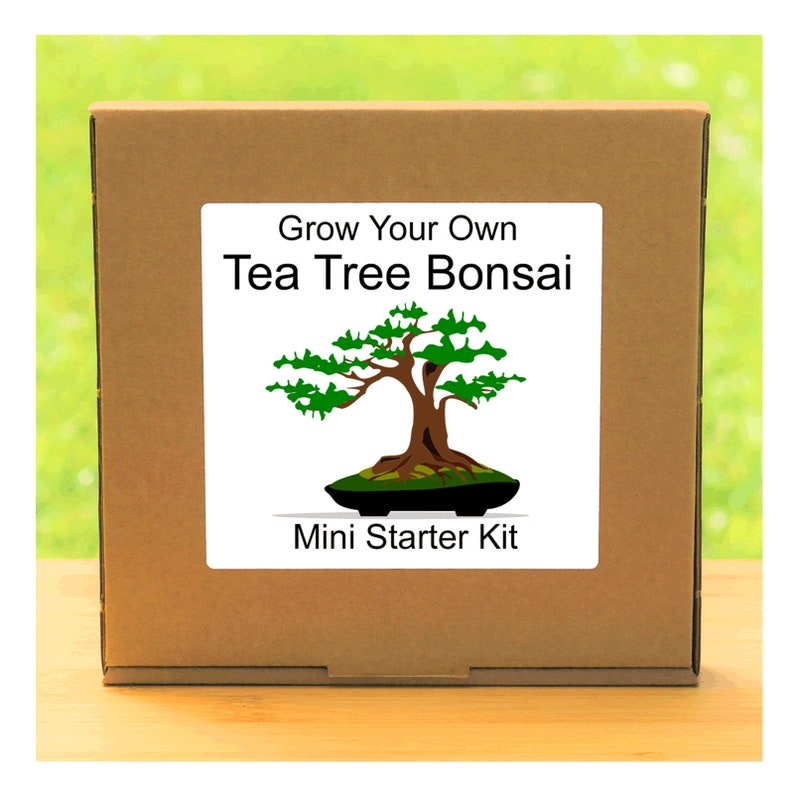 Grow Your Own Tea Tree Bonsai Growing Kit Complete Beginner Etsy