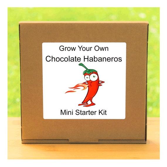 Grow Your Own Chocolate Habanero Chilli Plant Growing Kit – Beginner friendly indoor gardening starter kit – Gift for men, women or children