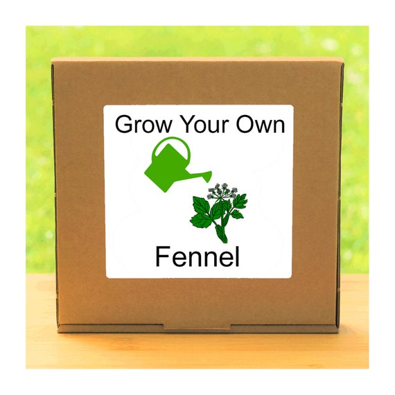 Windowsill Herb Garden - Grow Your Own Fennel Plant Growing Kit – Complete beginner friendly indoor gardening starter kit