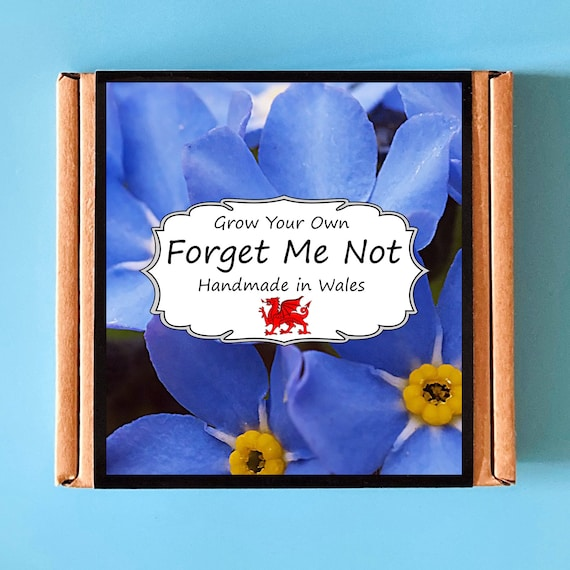 Grow Your Own Forget Me Not Plant Kit - indoor gardening gift for adults or children - perfect birthday gift
