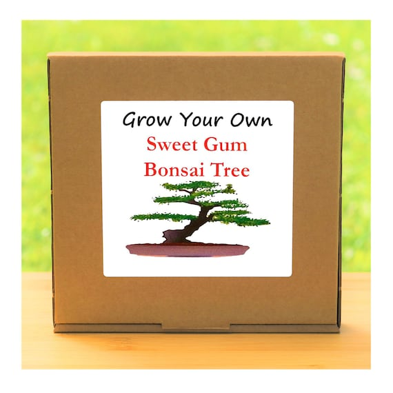 Gardening Gift - Grow Your Own Sweet Gum Bonsai Tree Kit