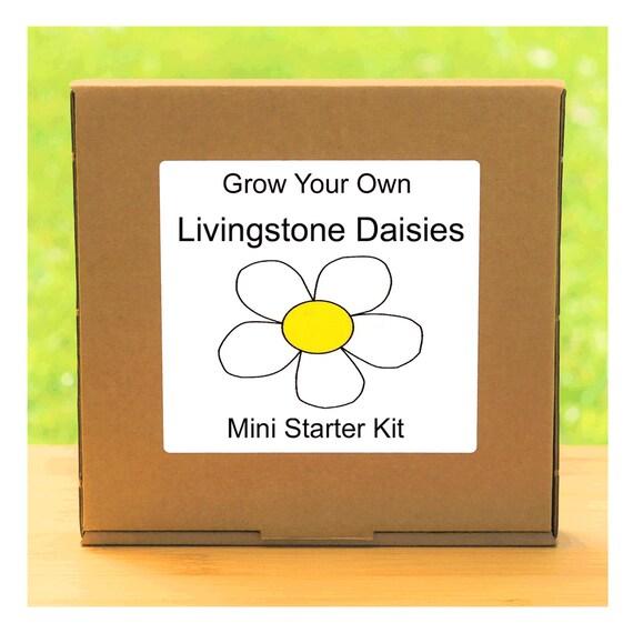 Grow Your Own Livingstone Daisy Flowers Growing Kit – Beginner friendly indoor gardening starter kit – Gift for men, women or children