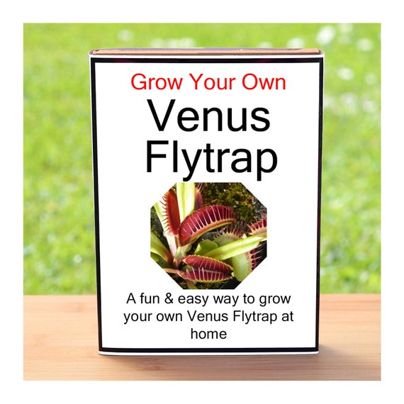 Gardening Gift For Men Or Women Who Have Everything – Grow Your Own Venus Flytrap Plant