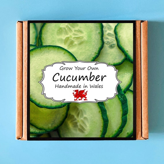 Grow Your Own Cucumber Plant Kit - indoor gardening gift for adults or children - perfect birthday gift - grow your own salad