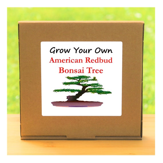 Gardening Gift - Grow Your Own American Redbud Bonsai Tree Kit