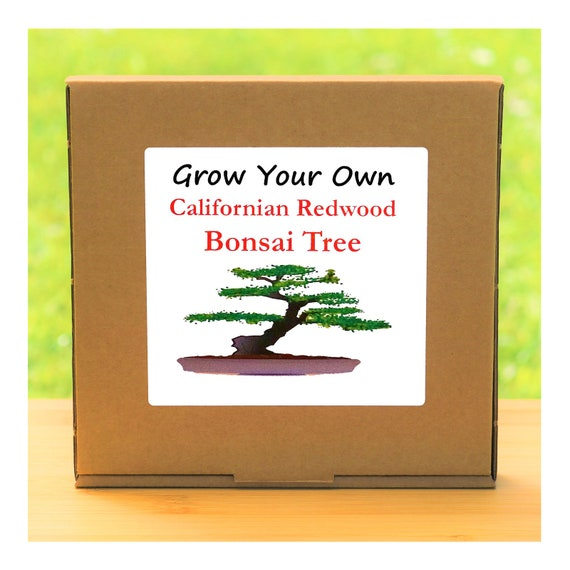 Gardening Gift - Grow Your Own Californian Redwood Bonsai Tree Kit