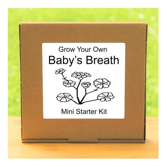 Grow Your Own Baby Breath Flowers Growing Kit – Complete beginner friendly indoor gardening starter kit – Gift for men, women or children