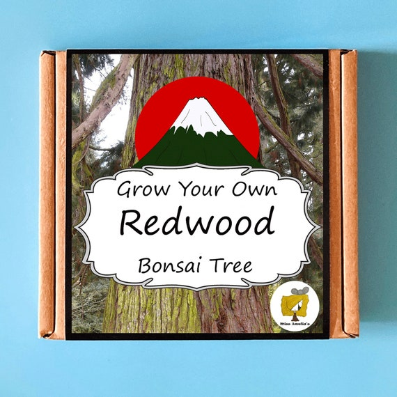 Grow Your Own Californian Redwood Bonsai Tree Kit. Indoor Gardening Gift. Perfect Birthday Gift For Adults, Children, Kids. Bonsai Tree Kit.