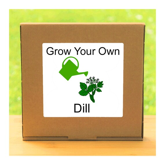 Windowsill Herb Garden - Grow Your Own Dill Plant Growing Kit – Complete beginner friendly indoor gardening starter kit