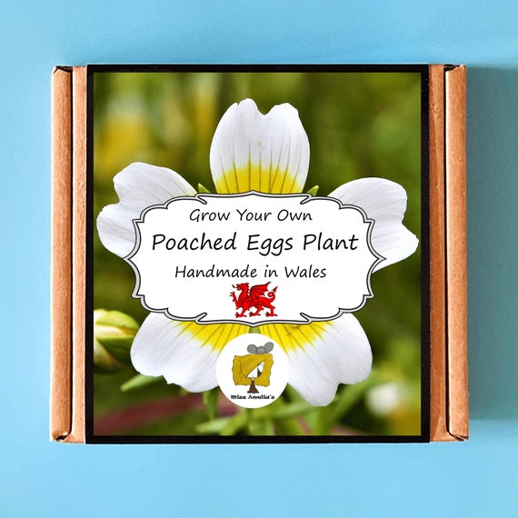 Grow Your Own Poached Eggs Plant Kit. Indoor Gardening Gift. Perfect Birthday Gift For Adults, Children, Kids. Flowers Planting Kit.
