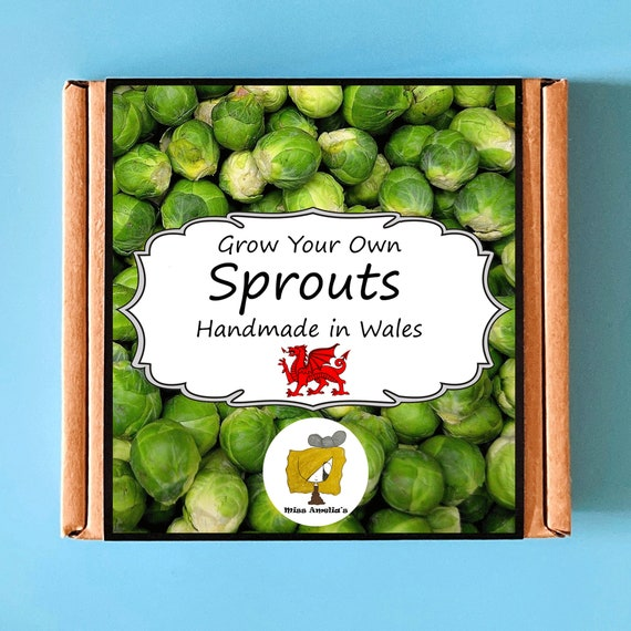 Grow Your Own Sprouts Plant Kit. Indoor Gardening Gift. Perfect Birthday Gift For Adults, Children, Kids. Vegetable Planting Kit.