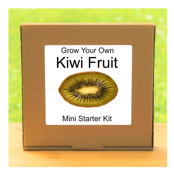 Grow Your Own Kiwi Fruit Tree Growing Kit – Complete beginner friendly indoor gardening starter kit – Gift for men, women or children