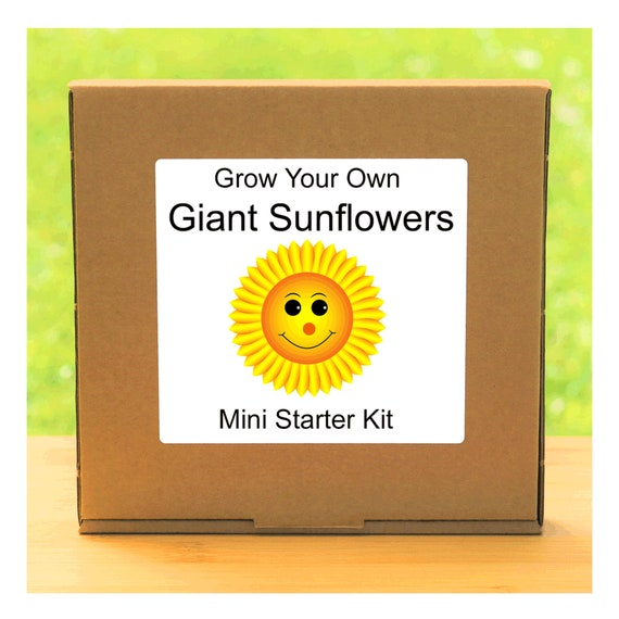 Grow Your Own Giant Sunflower Plant Growing Kit – Complete beginner friendly indoor gardening starter kit – Gift for men, women or children