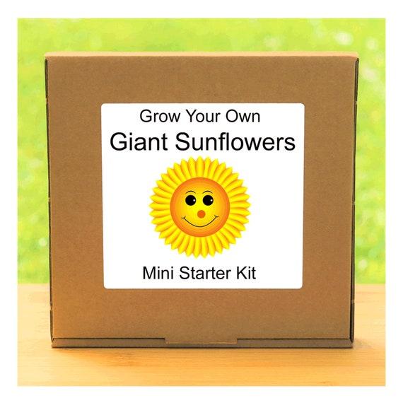Grow Your Own Giant Sunflower Plant Growing Kit – Beginner friendly indoor gardening starter kit