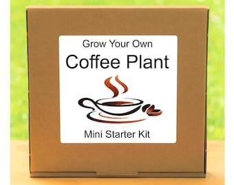 Grow Your Own Fresh Coffee Plant Growing Kit – Complete beginner friendly indoor gardening starter kit – Gift for men, women or children