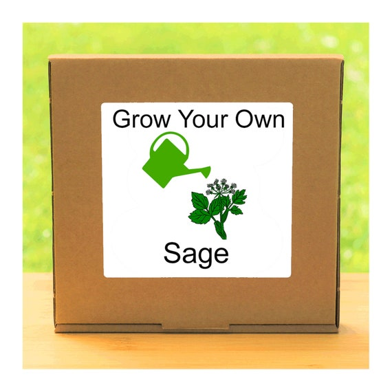 Windowsill Herb Garden - Grow Your Own Sage Plant Growing Kit – Complete beginner friendly indoor gardening starter kit
