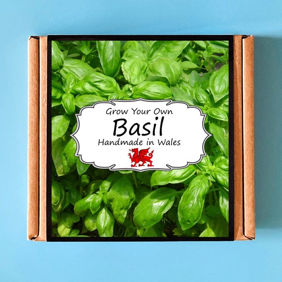Grow Your Own Basil Herb Plant Kit - Indoor Gardening Gift