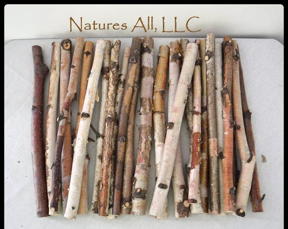 Crafting Sticks/White Birch Sticks/24 Piece Set-10 Inch Lengths/Wood Sticks For Crafts/Rustic Wood Sticks For Crafting/Tree Branch Sticks/