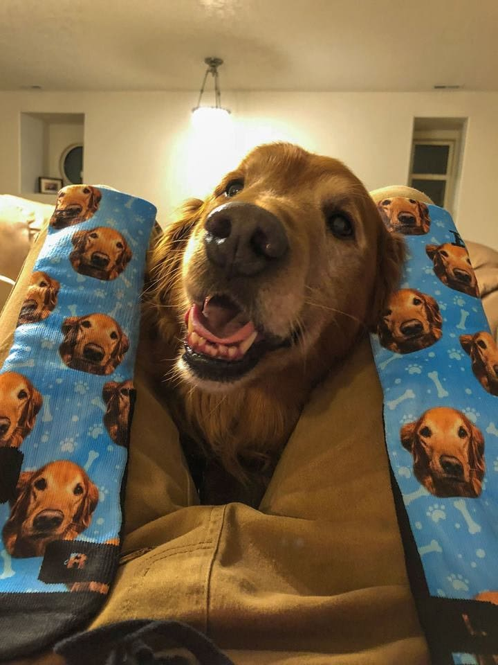 Blue customized dog socks with a Golden Retriever on them.