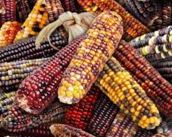 Native corn, 595, Elizabeth's Studio, cotton, cotton quilt, cotton designer