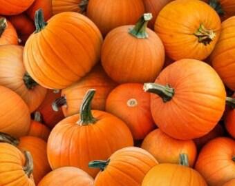Pumpkins, 615, Elizabeth's Studio, cotton, cotton quilt, cotton designer